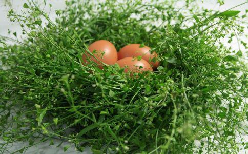 春季吃什么食物能养生 春天吃哪些食物可以养生 春季吃什么蔬菜能养生