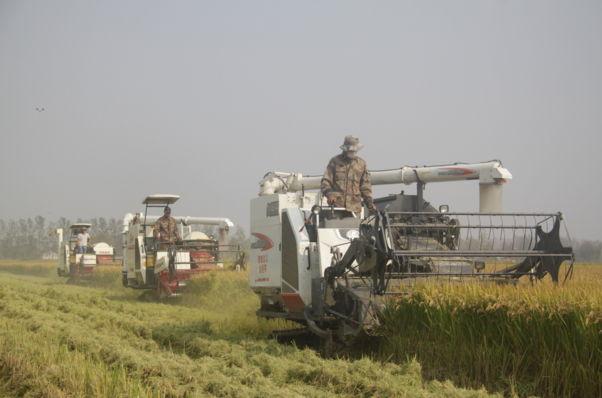 郯城县杨集镇:稻米之乡喜迎丰收年