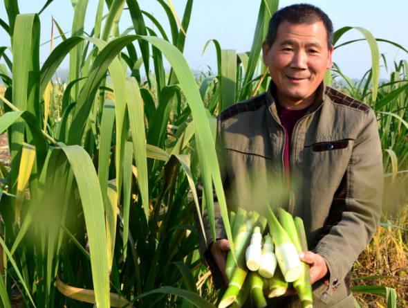 郯城县归昌乡特色种植助农增收