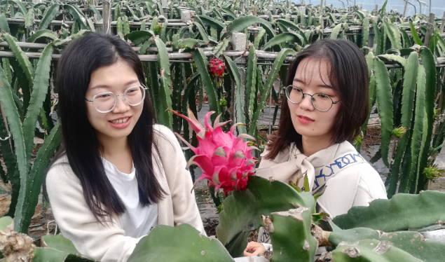 山东淄川:南果飘香  助农增收