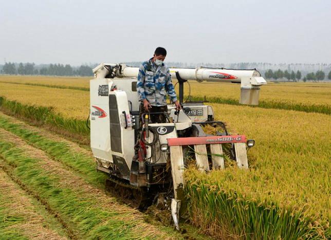 郯城:40万亩水稻开镰收割