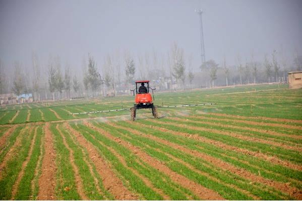 曲阜市吴村镇重视冬季小麦田间管理
