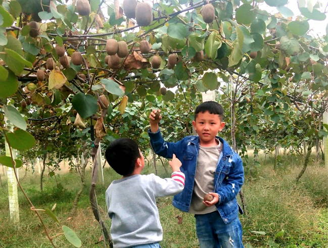 郯城:亲身体验农事 感受丰收喜悦