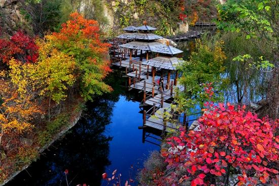 红枫辉映、漫山斑斓,九如山红枫节邀您听瀑赏枫