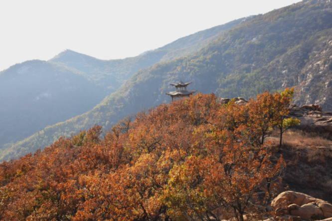 九仙山:满目金菊花儿香 大美深秋好风光