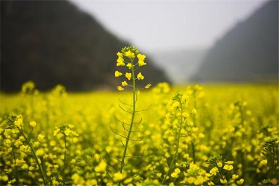 淄博的三月花季烂漫,我却给你准备好了一年的赏花攻略